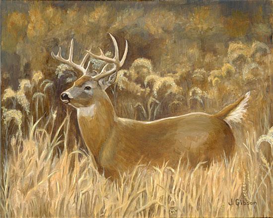 Deer  Wikipedia